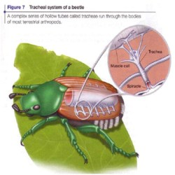 Breath - How - Insects