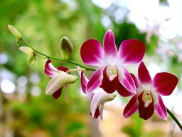 podlewanie orchidei
