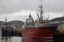 Hafen von Vestmannaeyjar