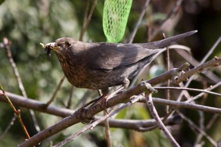 Madame auf dem Sprung ins Nest