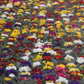 Blumenbeete im Gewächshaus