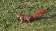Eichhörnchen vorm Haus