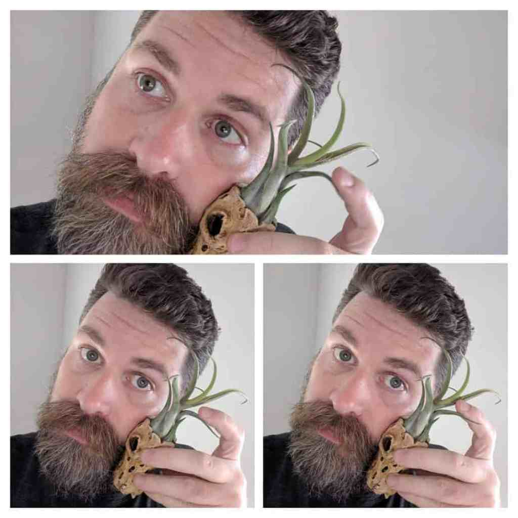An air plant for a minimalist. The perfect eco-friendly and sustainable gift for the hard-to-buy-for!
