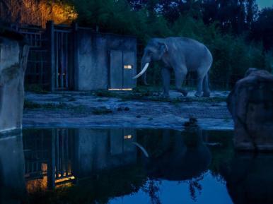 Alexander-bei-Nachts-im-Zoo