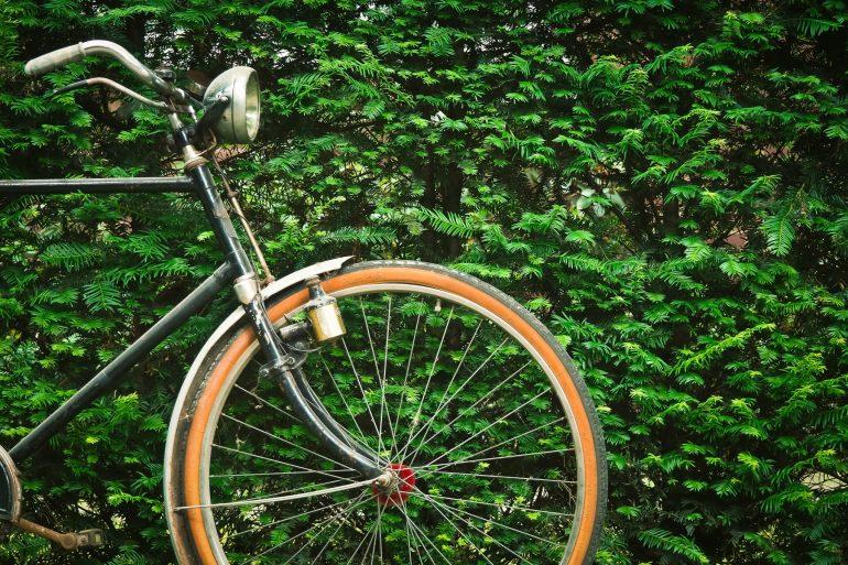 fahrrad-pflanze-rad-163704
