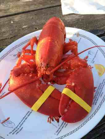An Ode to Lobster