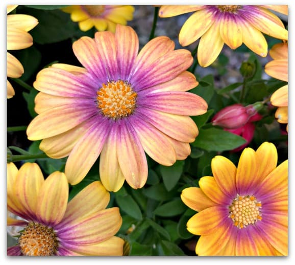 Why I want more flowers in the garden
