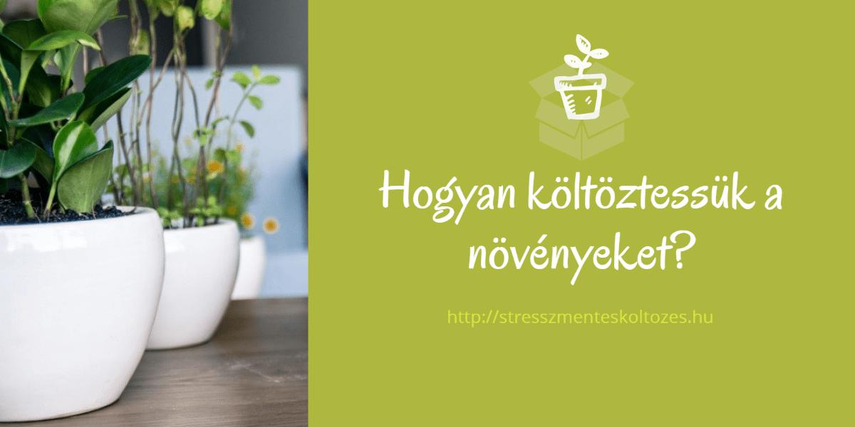 A szobanövények és a költözés (folytatás)