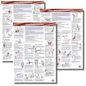 Stretching Charts | Anatomical Stretching Charts | Stretch ...