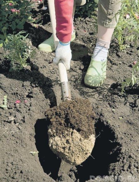 Древовидный пион: правила посадки и ухода. Как вырастить древовидный пион