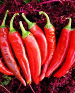 Pepper, Guajillo (Capsicum annuum), packet of 50 seeds, organic