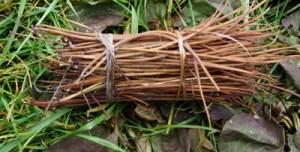 Indian Hemp (Apocynum cannibinum), packet of 30 seeds, organic