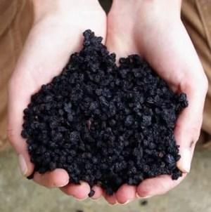 Bilberries (Vaccinium myrtillus), Dried, 100g Bag, Organic