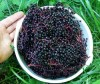 Elderberries, Black (Sambucus nigra), Dried, 100g Bag, Organic