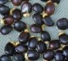 Cascara Sagrada (Rhamnus purshiana), packet of 10 fresh seeds, organic [Sorry, NO International sales of this seed]