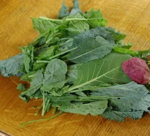 Cooking_greens_harvest_300