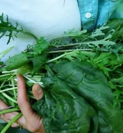 Greens, Mixed Salad Seeds, big 3 g packet, Organic