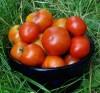 Tomato, Lakota (Lycopersicon esculentum), packet of 30 seeds, organic