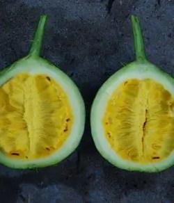Gourd, Snake (Trichosanthes kirilowii), packet of 10 seeds, organic