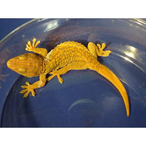 Wholesale Reptiles - Year of Clean Water