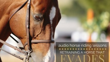 A Horse who is Heavy on your Hand - Strides for Success