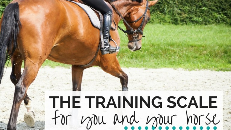 The Training Scale for You & Your Horse