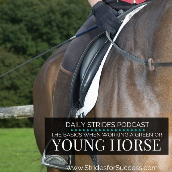 The Basics when Working a Young or Green Horse