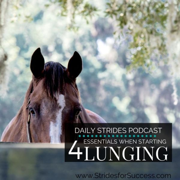 4 Essentials for getting Started with Lunging