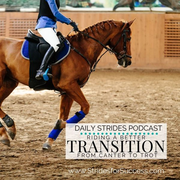 Transition from canter to trot