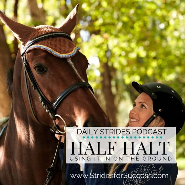 Half Halt on the Ground with Your Horse