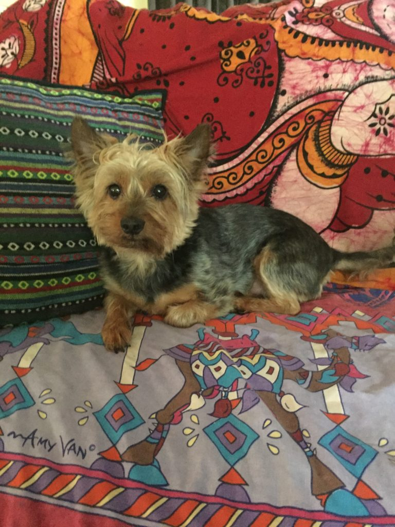 Our darling Hamish. Such a gorgeous little character, who is jammed-packed with personality,