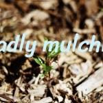 madly mulchin'
