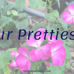 Our Pretties…