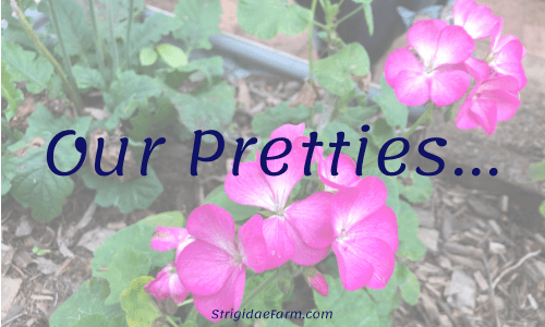 our pretties