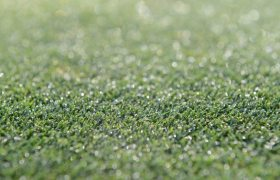 Autumn dew points to disease risk