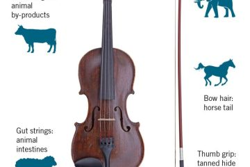 Search for a vegan violin, violin with explanation of animal products used in its construction