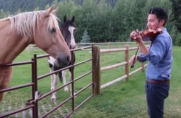 Violinist Ray Chen serenades some equine friends in a YouTube video.