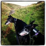 first hillwalking trip with hounds
