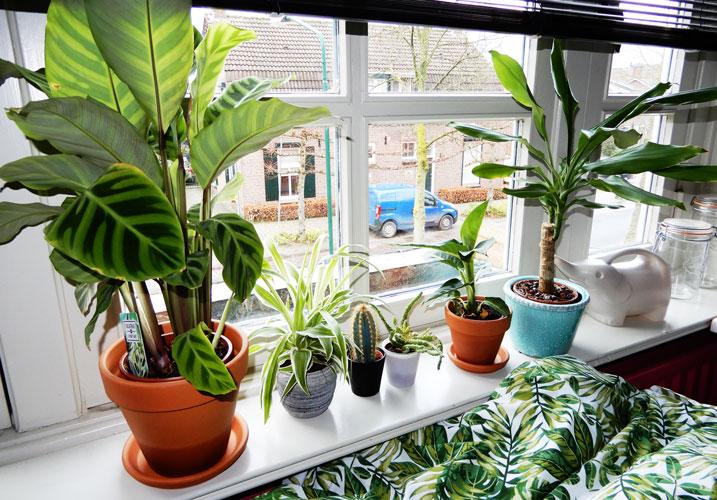Gezellige plantjes op mijn slaapkamer