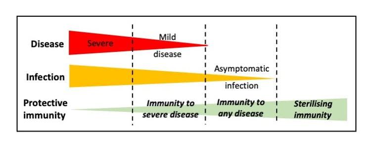 SARS-CoV-2, BBC, inmunidad rebaño