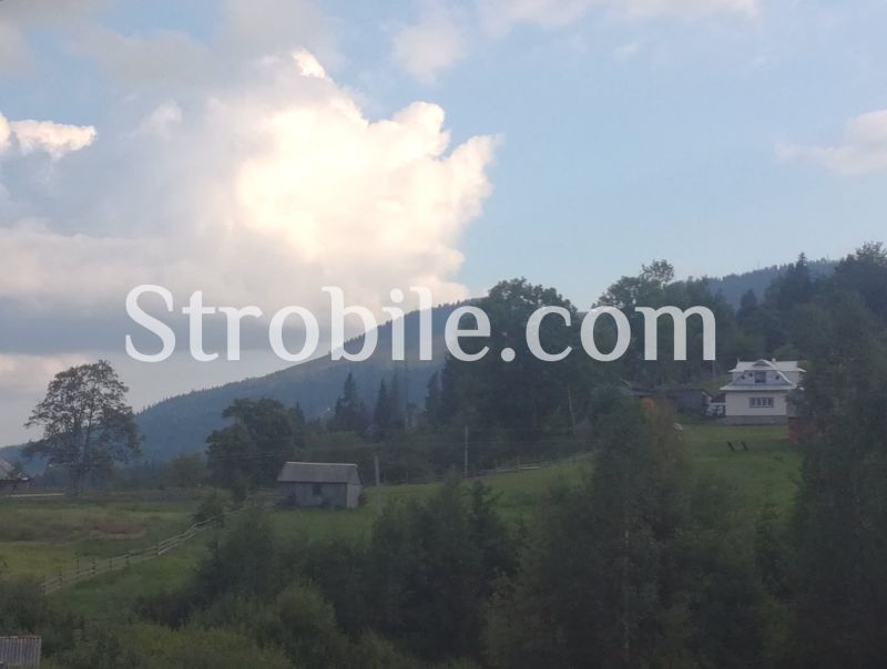 Raw materials arrive from the ecologically clean mountainous area of Bukovina