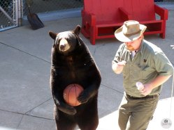 Bear-Playing-Basketball