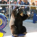 Bear Posing for Treat