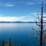 Bare Tree at Lake Tahoe
