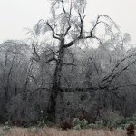 Ice Covered Landscape
