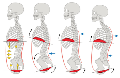 動態神經肌肉穩定術(DNS) - 復癒空間