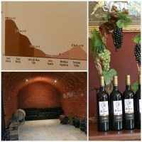 A wine tour in Tarija