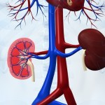 GranuFlo and Naturalyte affect more than just the kidneys
