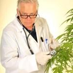 Colorado Funds Medical Marijuana Research