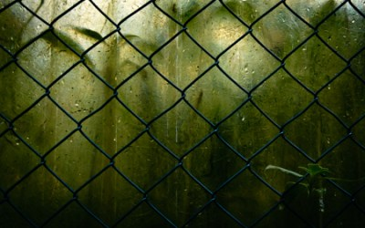 beyond the fence lies death